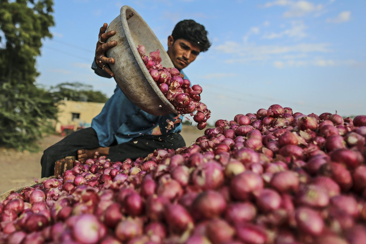 Today Onion Price
